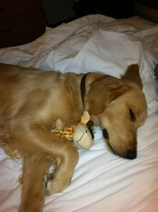 Animals with Stuffed Animals (93 pics)