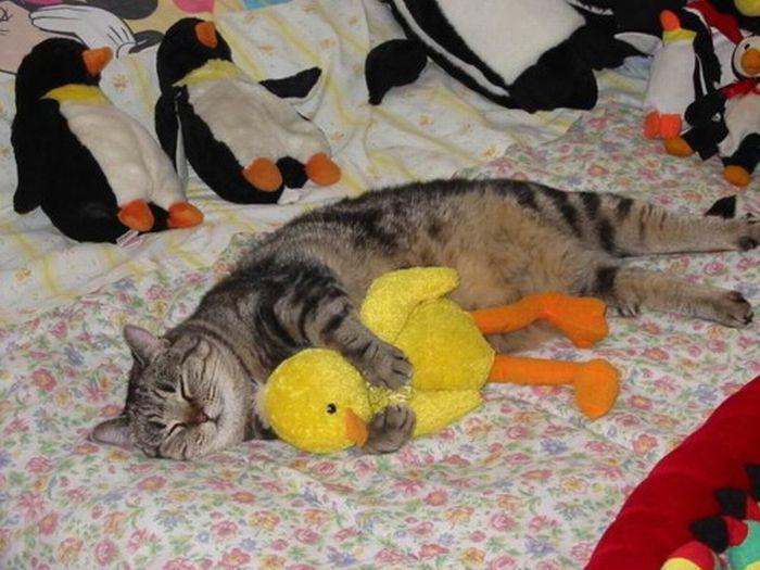 Animals with Stuffed Animals (93 pics)