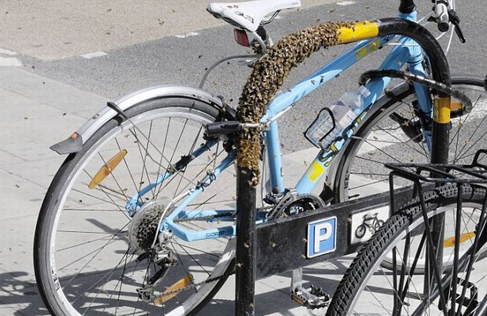 Extreme Way to Protect Your Bike from the thieves (5 pics)