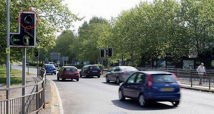 Traffic Light Dove (4 pics)