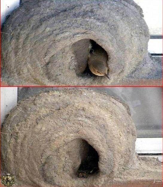 Building a Nest (11 pics)