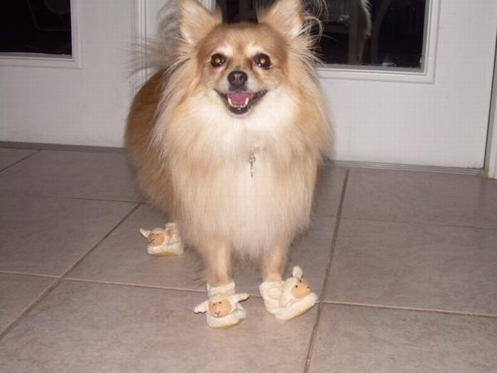 Dogs in Slippers (17 pics)