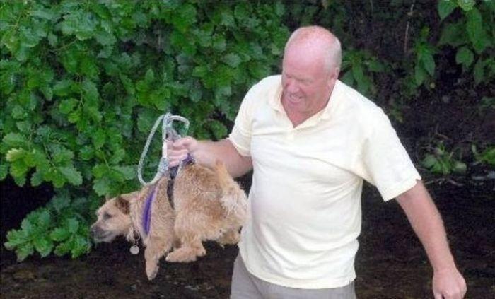 Rescuing a Dog (6 pics)