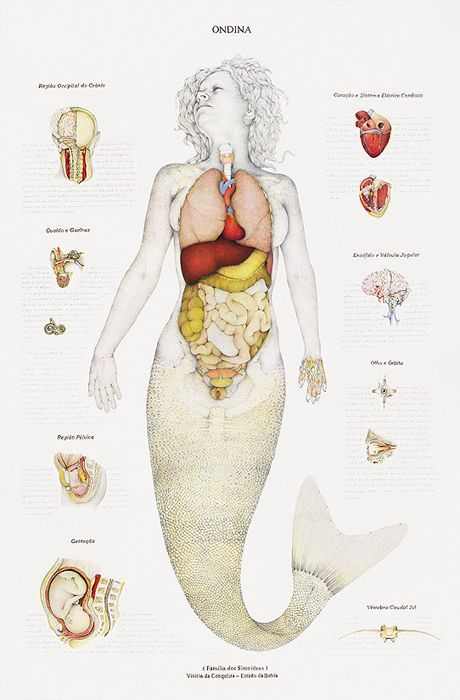 Monster Anatomy (8 pics)