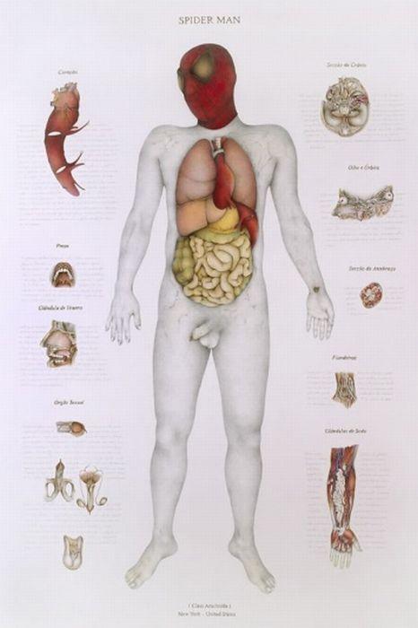 Monster Anatomy (8 pics)