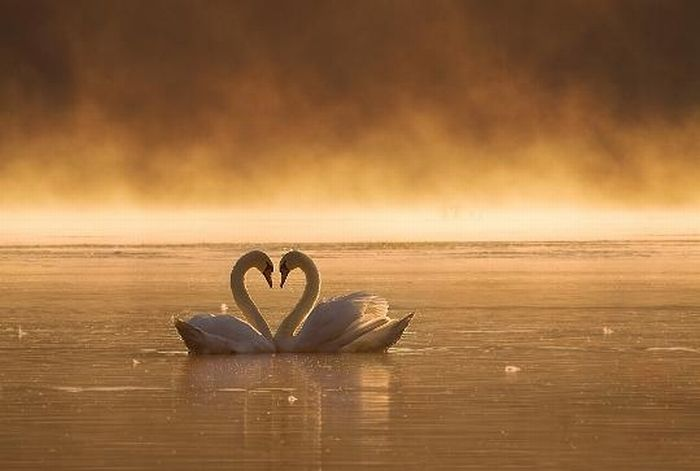 'Love' Photography (24 pics)