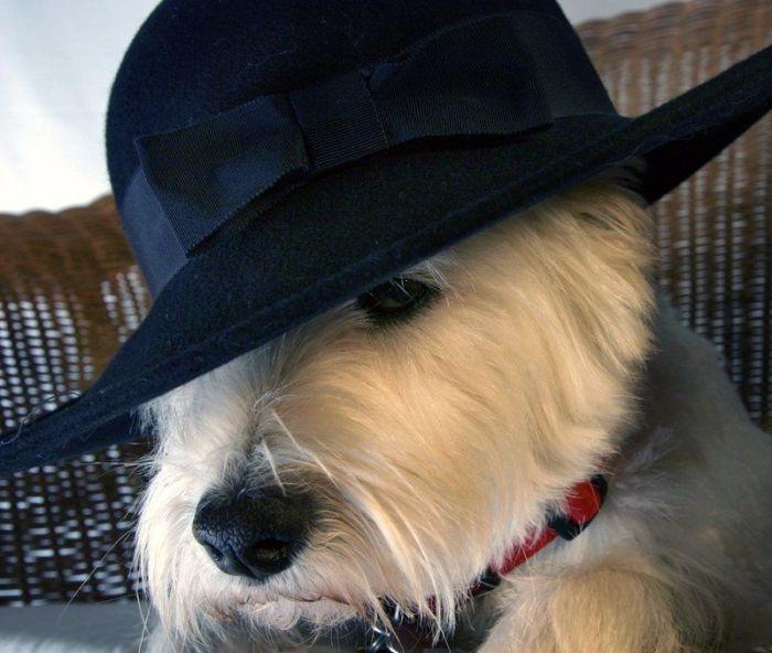 Dog Photos (111 pics)
