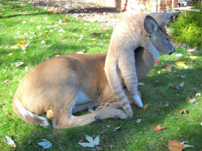 Animal Friendship (5 pics)