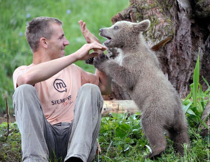 Bear Cub Adopted by People (4 pics)