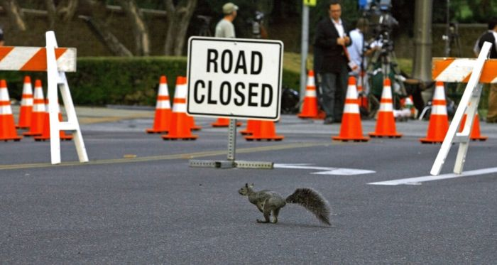 Animals Crossing the Roads (22 pics)