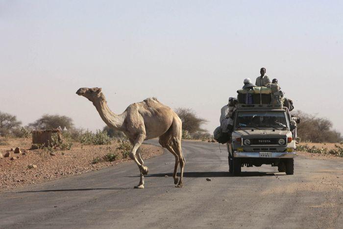 Animals Crossing the Roads (22 pics)