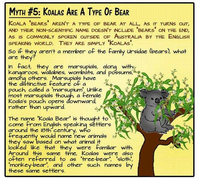 8 Animal Myths Dispelled (9 pics)