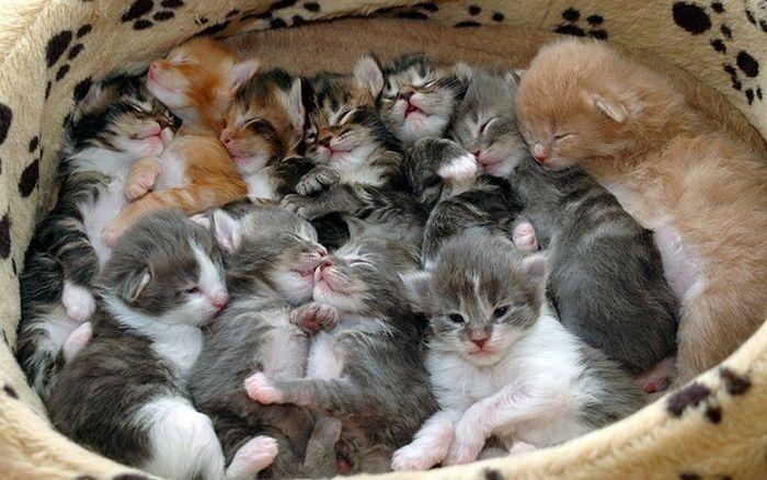 http://cdn.acidcow.com/pics/20110608/cats_cats_24.jpg