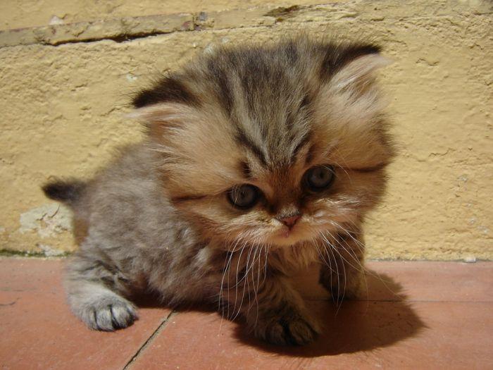 Cute Kittens (100 pics)