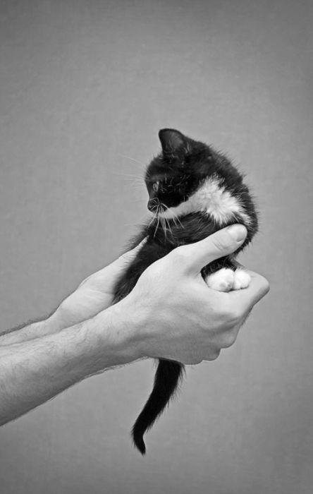Pic érotique de chat noir