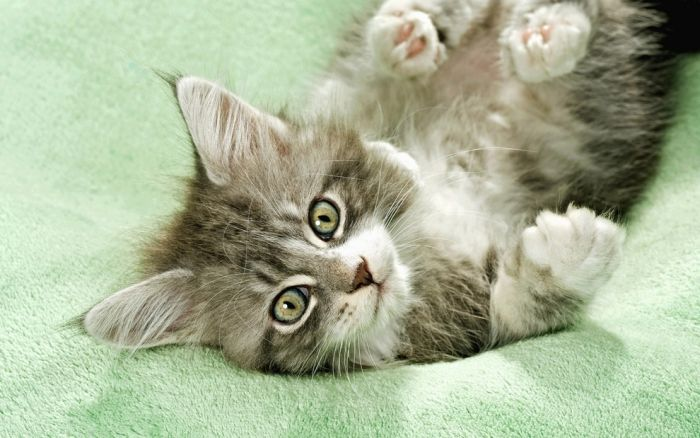 Imágenes de gatitos, ternura 100%