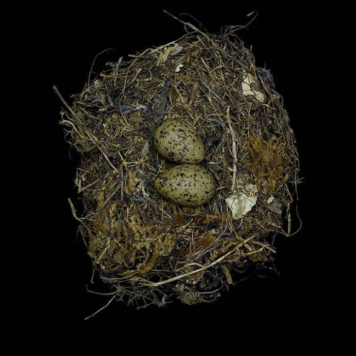Nests (25 pics)