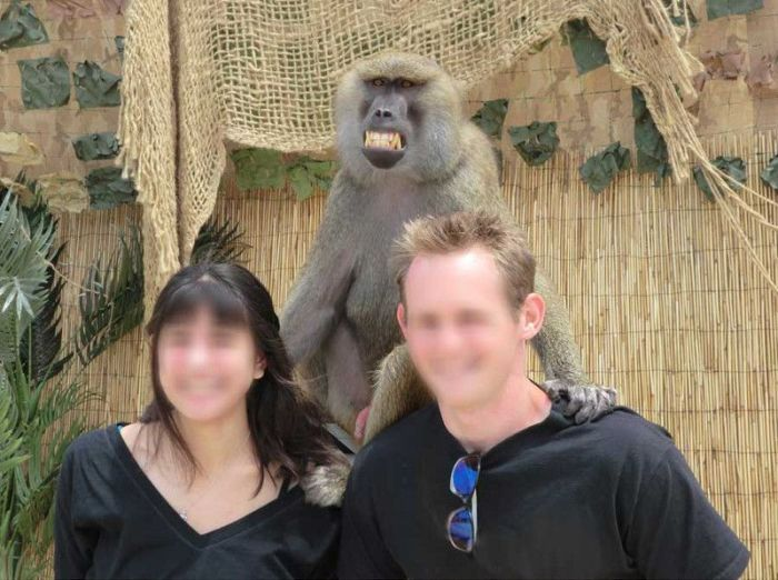 Monkey Photobomb (4 pics)
