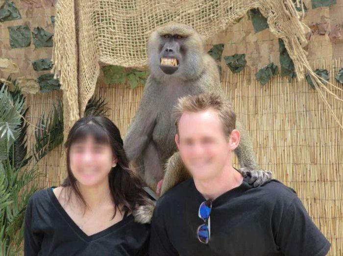 Monkey Photobomb (4 pics)