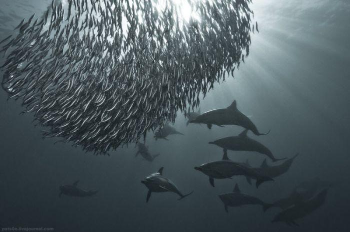 Underwater World (21 pics)