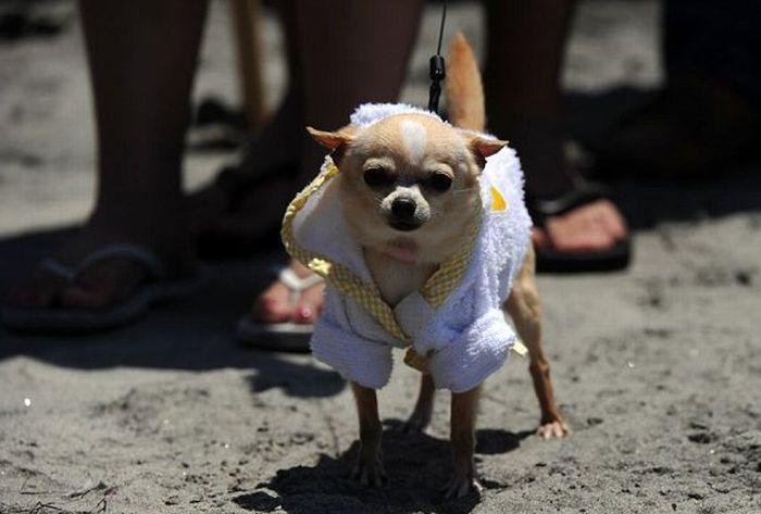 Surf Dog Championship 2011 (14 pics)