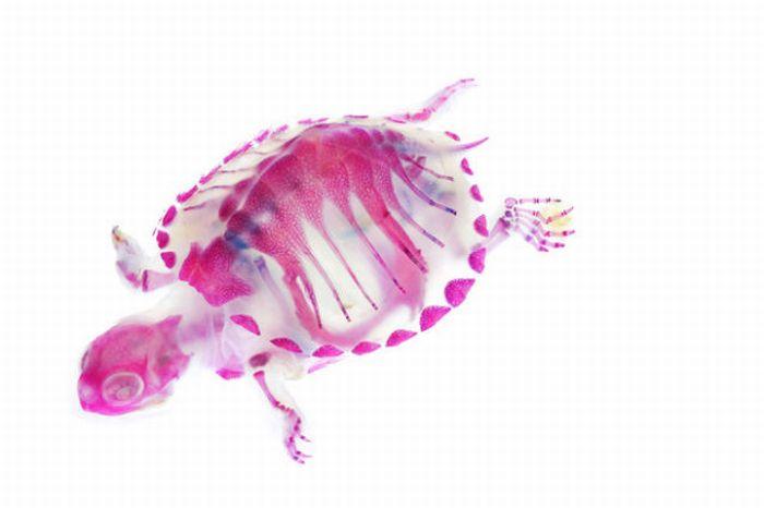 Transparent Sea Life (11 pics)