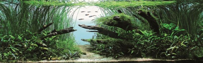 Beautiful Aquariums (21 pics)