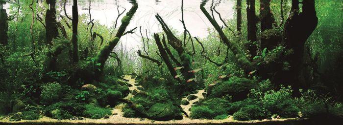 Beautiful Aquariums (21 pics)