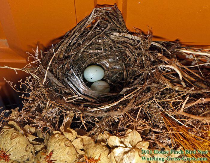 El día a día del nacimiento de un pájaro