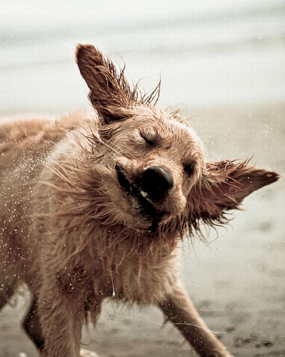 Dogs Shaking Off The Summer Heat (30 pics)