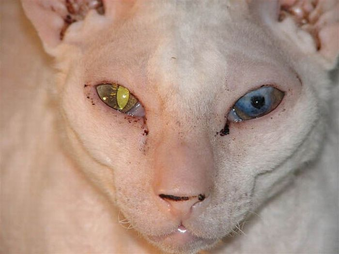 Ugly and Disturbing Animals (24 pics)