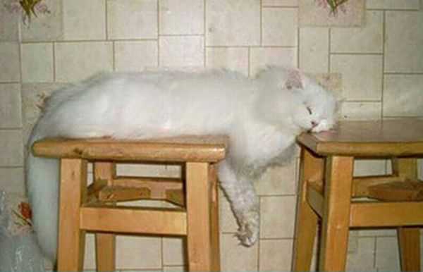 Cats Attempt Planking (12 pics)