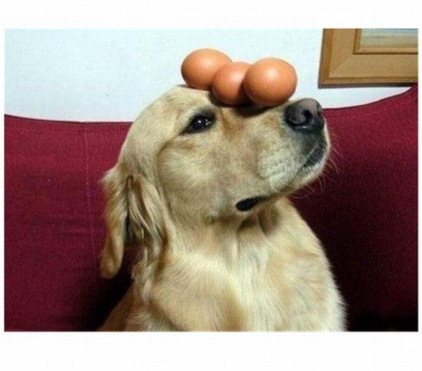 Eggcellent (4 pics)