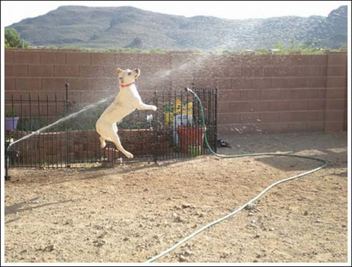 Dogs and sprinklers (33 pics)