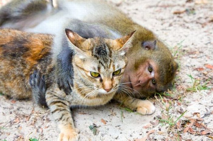 Cat and Monkey (15 pics)