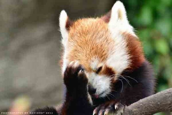 Animal Facepalms (15 pics)