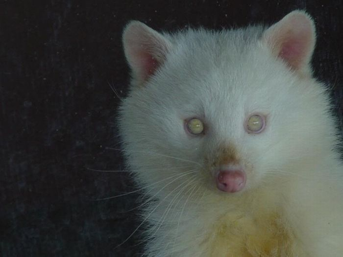 Albino Animals (20 pics)