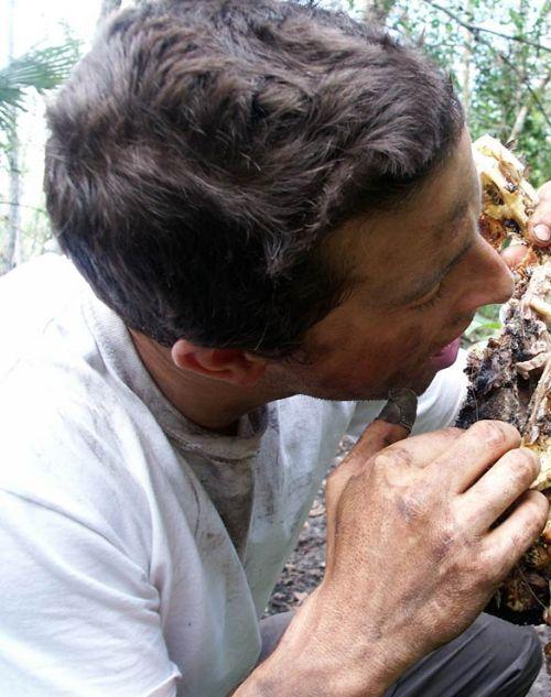 The Grossest Things Bear Grylls Has Eaten  (18 pics)