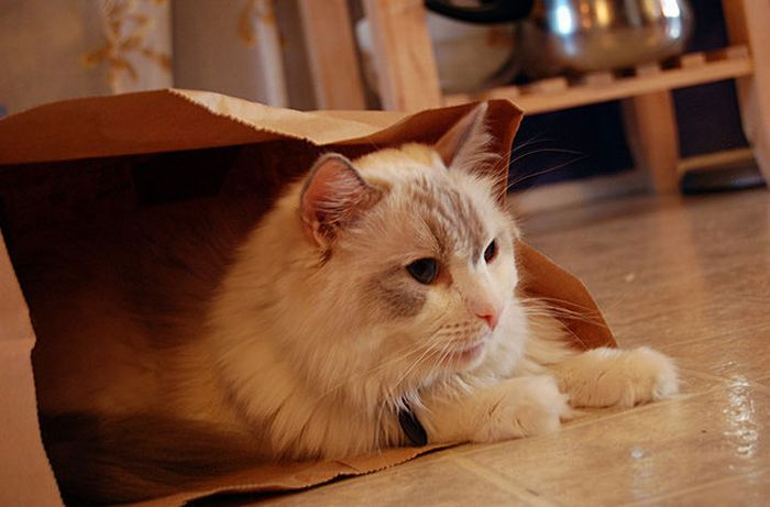 Cats in Bags (17 pics)