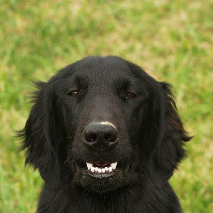 Awkward Dog Smiles (25 pics)