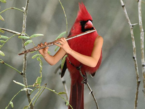 Birds With Arms (72 pics)