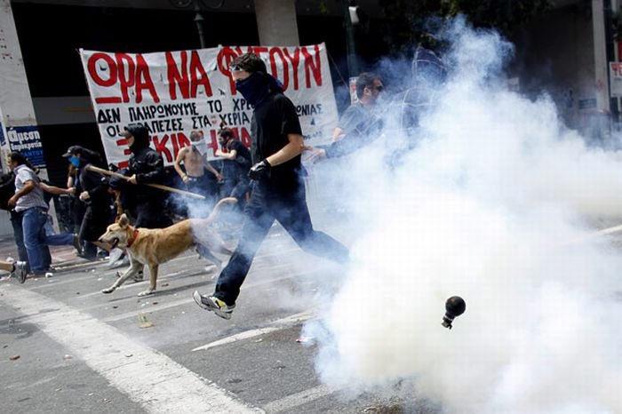Greece's Riot Dog Is Back... Again! (14 pics)