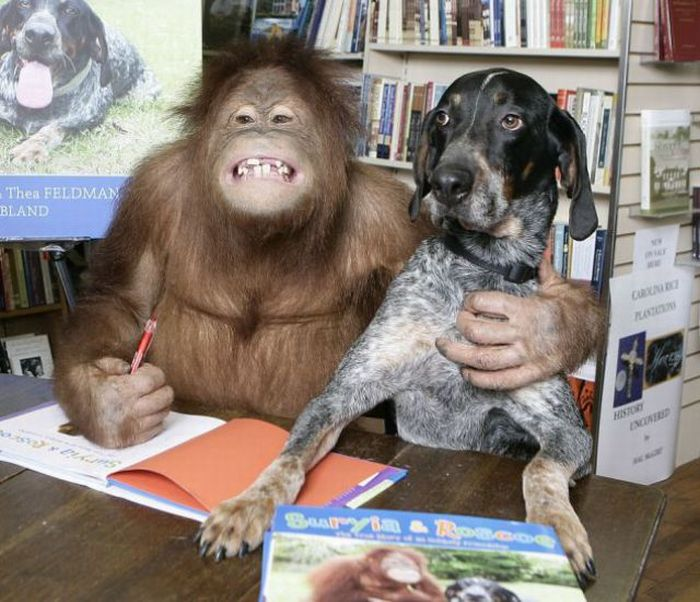 The Dog and the Orangutan are BFF (9 pics)