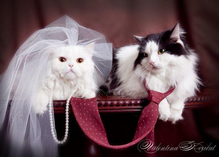 Cutest Animal Wedding Photos (15 pics)