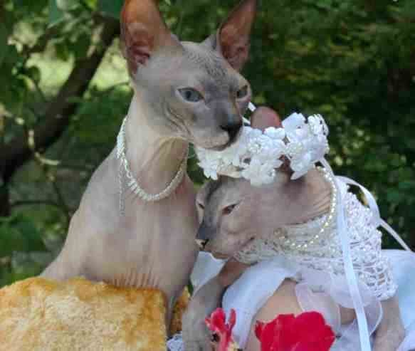 Cutest Animal Wedding Photos (15 pics)