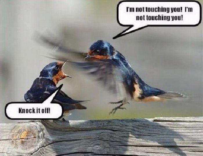 Talking Animals (14 pics)