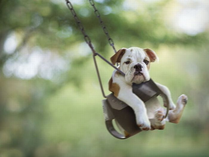 Cute swinging Dogs (25 pics)
