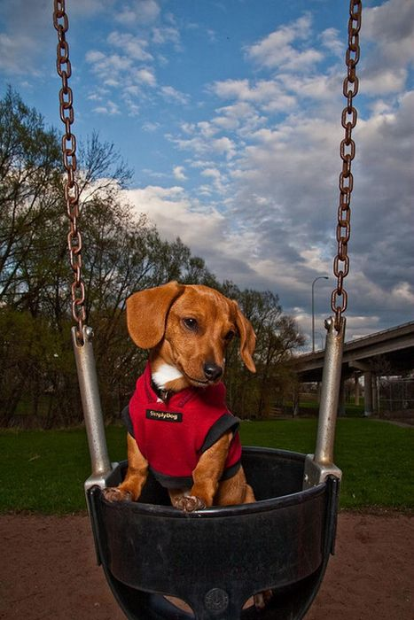 Cute swinging Dogs (25 pics)