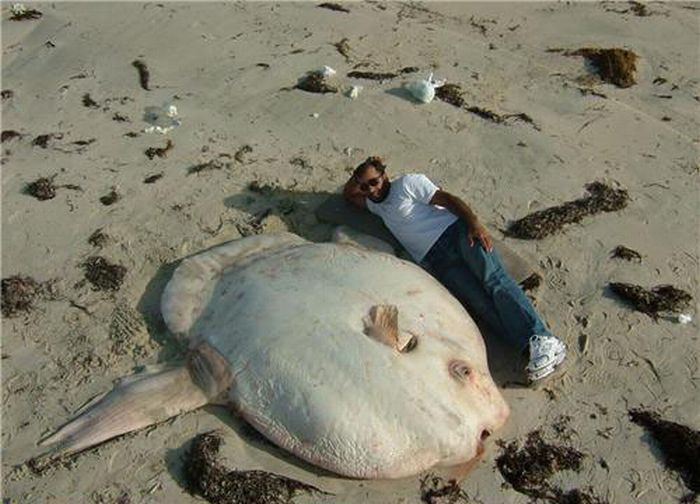 Giant Critters (37 pics)