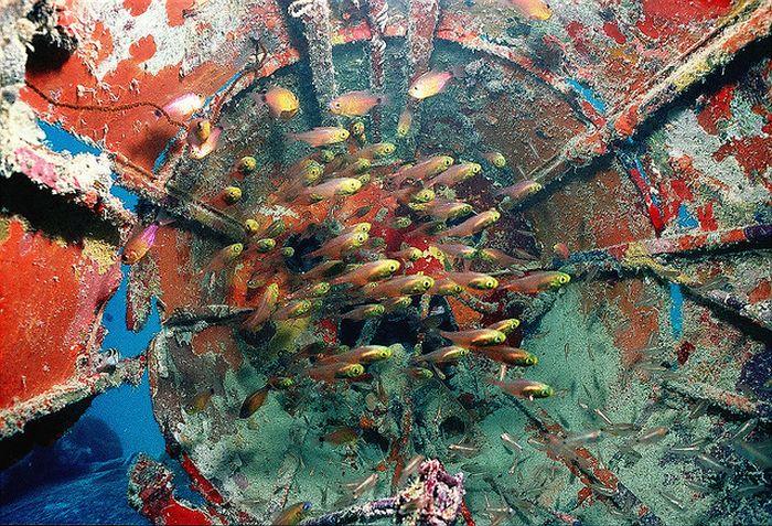 Amazing Artificial Reefs. Part 2 (17 pics)